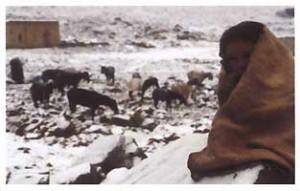 Djbel Sarhro versant nord. À près de 2 300 mètres d'altitude, l'arrivée au col de Tizi n'Ouarg devrait dévoiler les sommets tout proches du Haut-Atlas, de l'autre côté de la vallée du Dadès. Mais en ce mois de février, le panorama de carte postale laisse la place à ces paysages surréalistes d'une végétation pré-saharienne ployant sous la neige. Une scène ponctuée d'hommes en djellabas guidant des mules peu rassurées sur des sentiers devenus très glissants. Photo : Pascal Kober